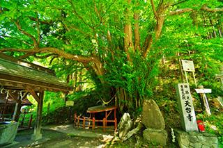 HP-天台寺_20130624-001tendaiji_reiboku_s