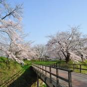 九戸城跡①_s