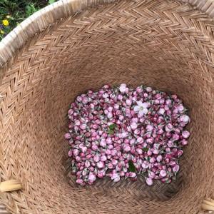 来年に向けて花粉を取りました。