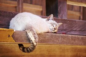 猫の恩返しの寺「福蔵寺」