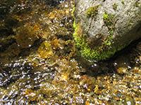 岩誦坊の湧水