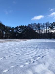 雪に覆われた漆の苗畑。