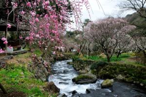 『熱海で春の訪れを感じませんか?』